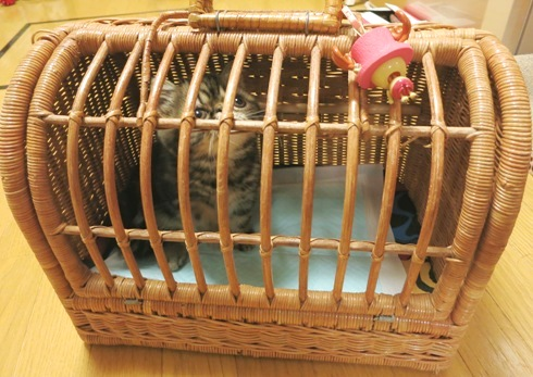 10)初めてのキャリーバッグ