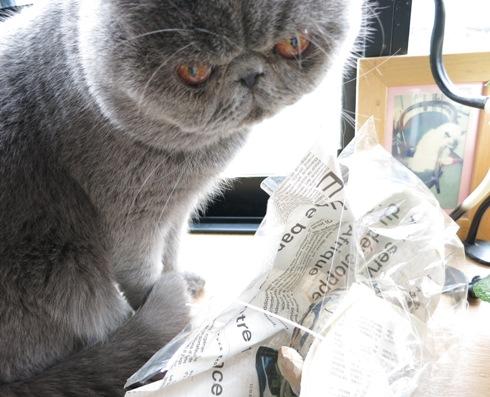 0)ガイゴグゴのお包みでずよ