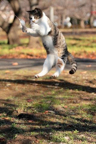 猫のジャンプ