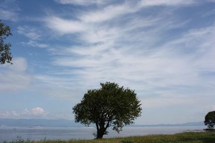 12.10琵琶湖畔キャンプ3樹と湖畔
