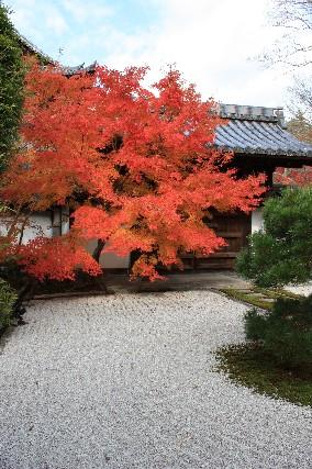 天授庵石と赤紅葉