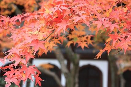 南禅寺へ行く途中の赤紅葉アップ