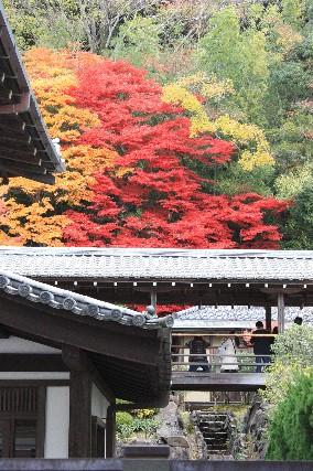 永観堂へ向かう途中の黄赤紅葉