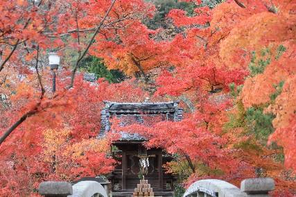 永観堂の石橋お堂の紅葉