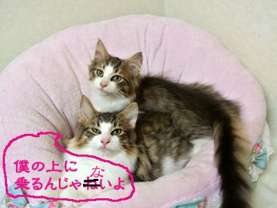 moni917-12b_20120925101148.jpg