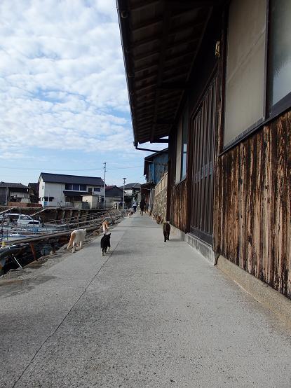 青島145