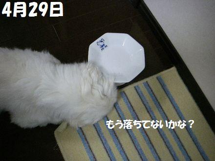 IMGP5993_3.jpg