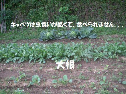 IMGP6623_3.jpg