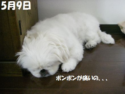 IMGP7182_3.jpg