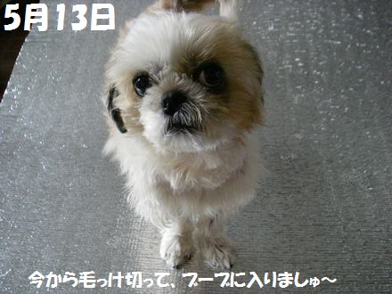IMGP7698_3.jpg