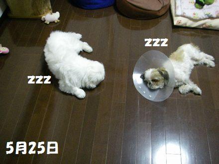 IMGP9146_3.jpg