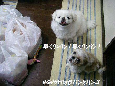 IMGP9902_3.jpg
