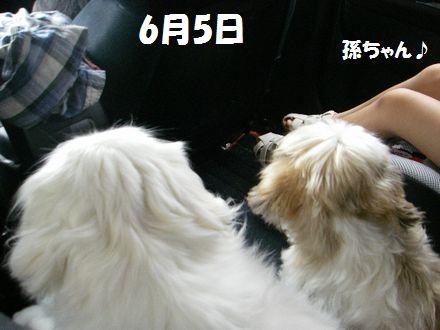 IMGP9919_3.jpg