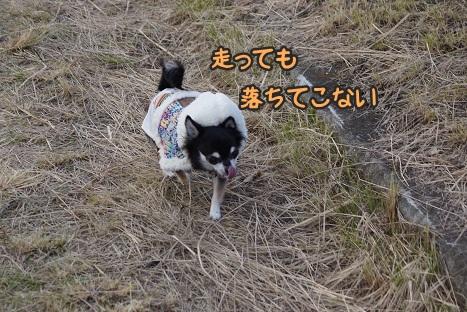 12_20130202002841.jpg