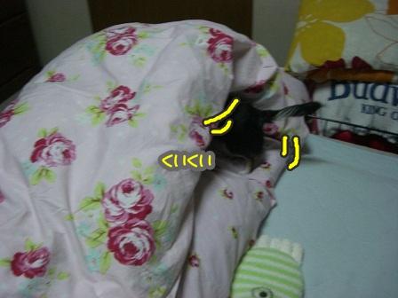 CIMG4264.jpg