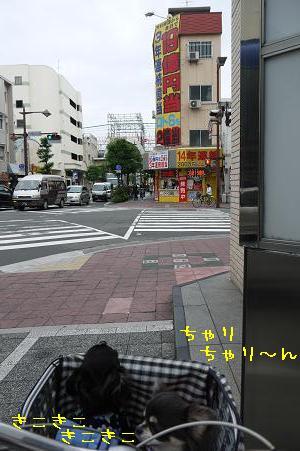 P1100620.jpg