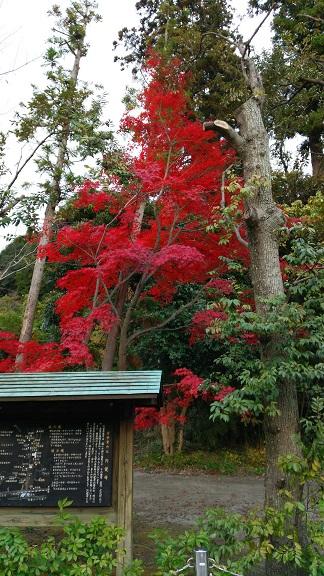 円覚寺山門の前の紅葉