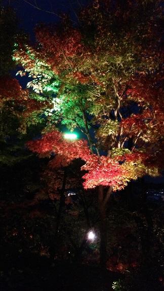 長谷寺夜景1