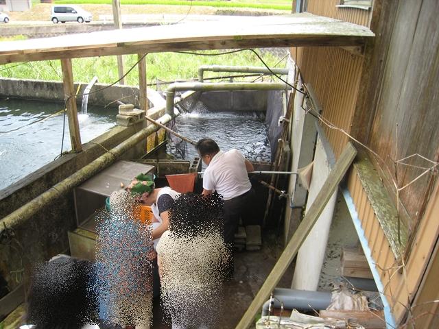 綾上淡水魚業生産組合