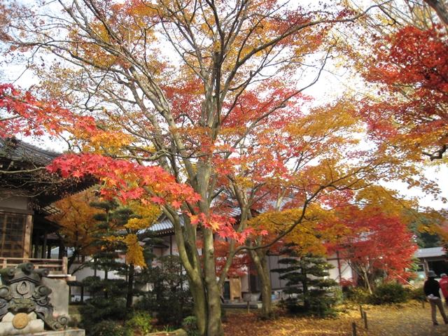法泉寺の紅葉