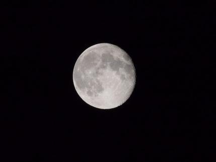 P9020013十六夜月