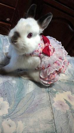 ドレスまき