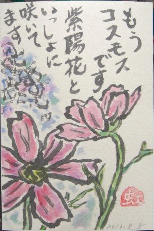 CIMG8301紫陽花とコスモス
