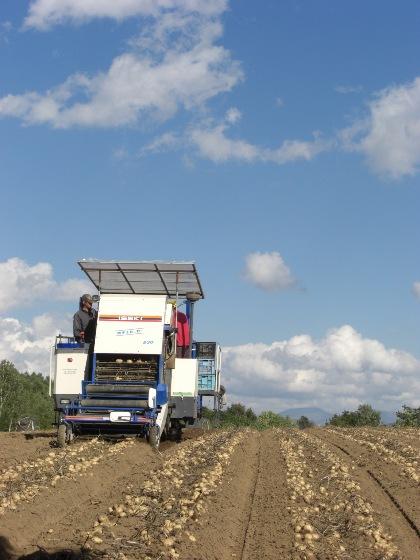 CIMG8549馬鈴薯の収穫