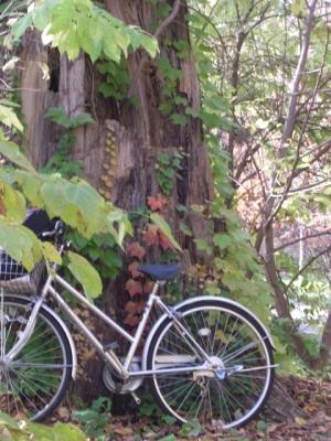 CIMG8922自転車