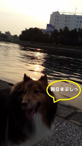 20130808_055606.jpg