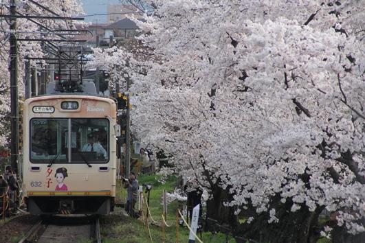 コピー ~ 桜並木