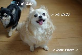 photo:mikimama