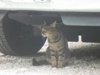 2012年06月23日_仙台新港・猫2