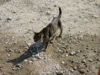 2012年08月23日 母猫