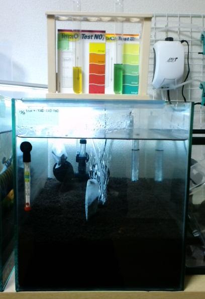 新規立上げ水槽
