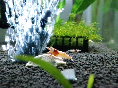 赤Bee水槽
