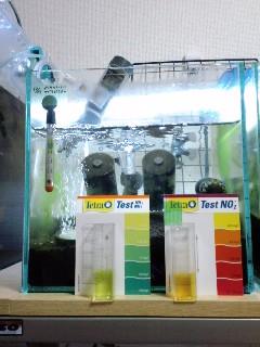 新規立ち上げ水槽