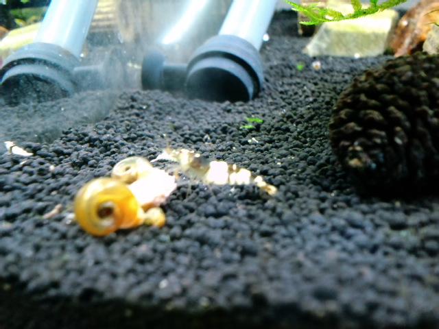 黒Bee水槽 ピントF0