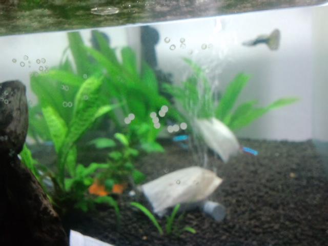 熱帯魚水槽3
