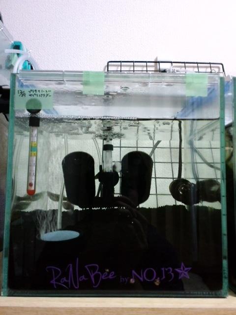 12月29日立ち上げ水槽3