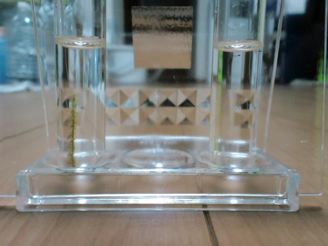 水質テスト1