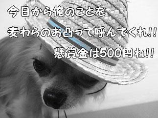 DSC06508.jpg