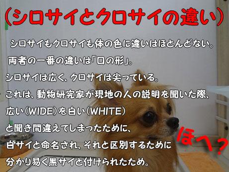 DSC07859_20120930123937.jpg