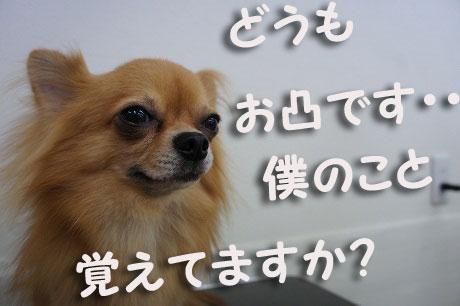 DSC08126_20121205152000.jpg