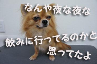 DSC08130.jpg