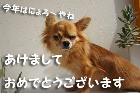 DSC08174_20130105143458.jpg