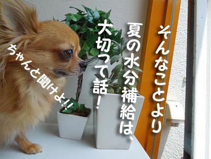DSCN1371.jpg