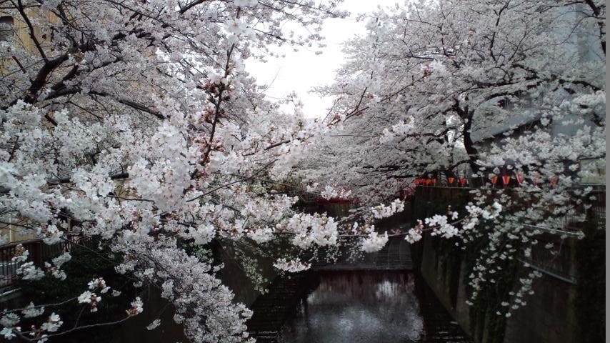 130326神宮~目黒川 (126)