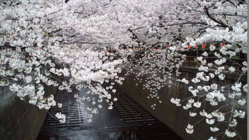 130326神宮~目黒川 (136)