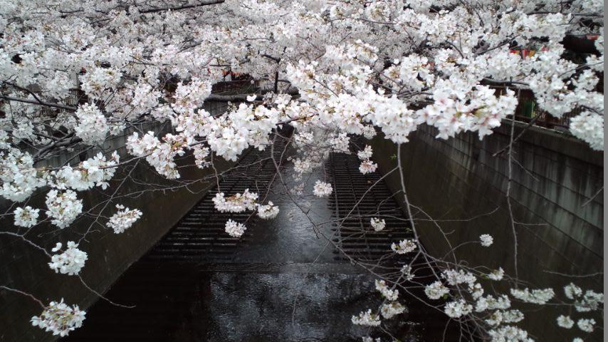 130326神宮~目黒川 (138)